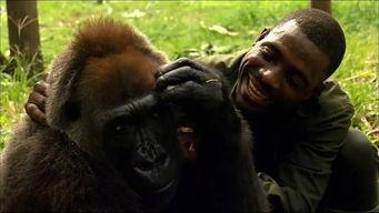 人和动物是朋友