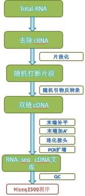 长链非编码RNA lnc RNA 测序报价 西安市长安区诺福克五金仪器经销部