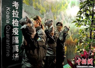 ...姆宾动物园启程,乘飞机抵广州白云国际机场,随后被送往广州长隆...