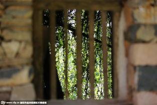免费av成人网-一幢幢废弃的祖屋被一片绿色覆盖,只见屋形不见屋顶;古老的石砖缝...