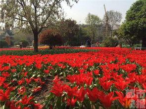 西安植物园举办郁金香展 约20万株郁金香竞相开放