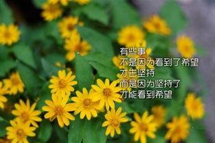 励志奋斗的微信名字 向日葵的微笑