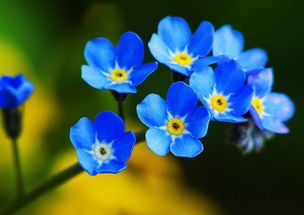 蓝色系列的花有哪些