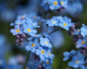 这两种蓝色的花叫什么