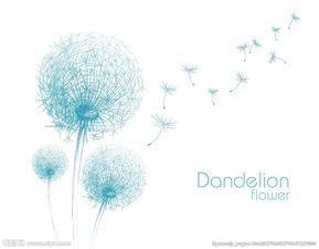 美丽的蒲公英植物特写高清图片