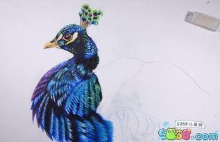 孔雀怎么画 孔雀彩铅画详细步骤图分享 14