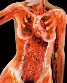 震撼 X线下的美女人体图片