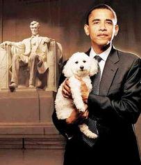 赵四牵狗拿棒球棒照片-...的一只狗(资料图片)-奥巴马开出新 第一狗 标准 或与自己同样是混...