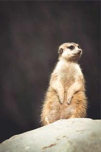 上海野生动物园 成人票上海野生动物园周六和朋友们一起去的,天还不...