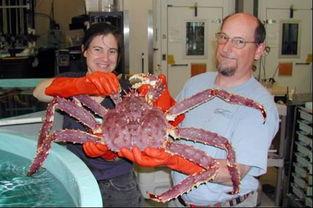 螃蟹全身长满寄生虫 这么恶心怎样吃才健康