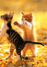 90张超级可爱的小猫 喜欢猫的不要错过哦 90P 动物世界