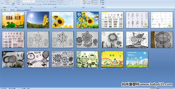 幼儿园大班美术PPT课件 线描画 向日葵