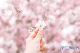 武大赏樱花注意事项